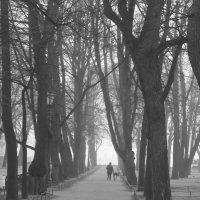 утро в Александровском саду :: Елена