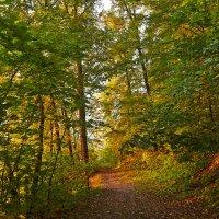 лес на закате :: Седа Ковтун