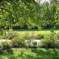 Солнечным сентябрьским днём в Ботаническом саду - уголок сада :: Маргарита Батырева