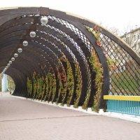 вид с Андреевского моста :: Анна Воробьева