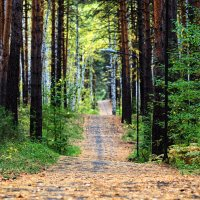 Прогулки в Сентябре. :: Сергей Адигамов