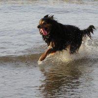 Восторженный пёс :: Natalia Harries