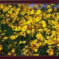 "картина "" Желые  цветы"" :: Владимир Бровко"