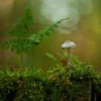 лесные жители... :: Natali-C C
