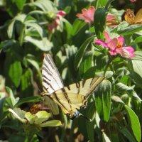 На лужайке бабочки на цветочки сели :: Наталья Джикидзе (Берёзина)