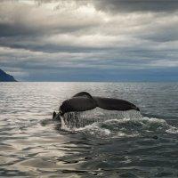 Рыба-кит :: Shapiro Svetlana