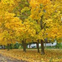 Осень на моей улице :: Лидия (naum.lidiya)