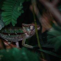 От фотографа не спрячешься...Мадагаскар! :: Александр Вивчарик