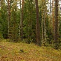 Перед лесным оврагом... :: марк