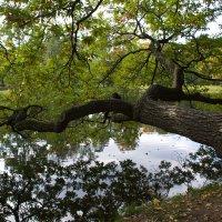 на прудом склонился дуб.... :: Валентина Папилова