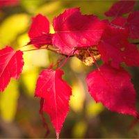 Осень... :: Андрей Пристяжнюк