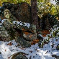 В кедровом лесу 2 :: Альберт Беляев