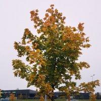 Осеннее деревце :: Aнна Зарубина