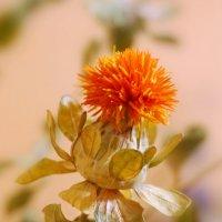 Сухие цветы :: Анна Приходько