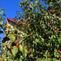 Осень на даче :: Татьяна Богачева