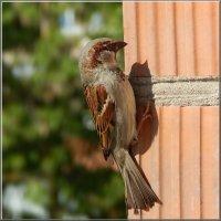 зацепинг по птичьи :: linnud
