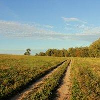 Дорога вдоль леса :: Ольга