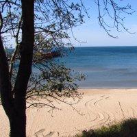 дерево на фоне прекрасного синего моря. :: Варвара Маевская