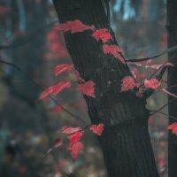холодная осень :: Екатерина Яицкая
