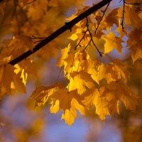Осенние листья :: Алексей Федотов
