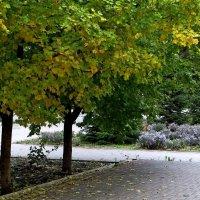Обняла природу осень... :: Татьяна Смоляниченко