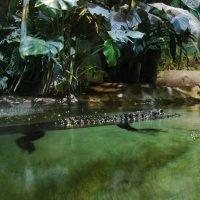 Крокодил :: Татьяна Иванова