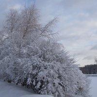 наутро после снегопада :: Анна Воробьева