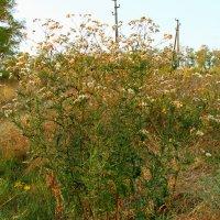 Осенние травы :: Алла ZALLA