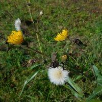 Превращения /жизненный цикл цветка/ :: demyanikita