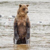 Сложно ловить рыбку в мутной воде.... :: Галина Шепелева