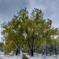 Первый снег, первого октября :: Марк Э