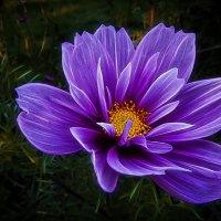 Цветок в парке 54. :: Василий Ярославцев