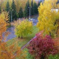 Моя улица . Осень . :: Мила Бовкун
