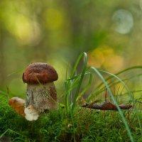 лесной мир... :: Natali-C C