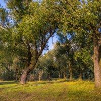 осень на пороге :: ирина лузгина