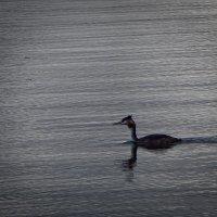 Последний заплыв перед дальней дорогой. :: Елена Михайлова .