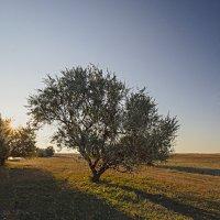 Дерево и тени :: Александр