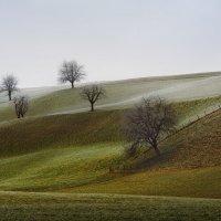 зимняя тоска :: Elena Wymann