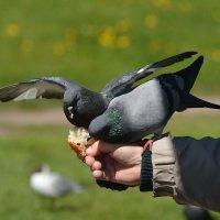 с руки :: linnud