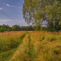 Осенние поля :: Лидия (naum.lidiya)