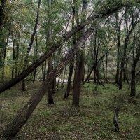 Атмосферный лес :: catandrix