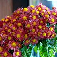 Последние цветы этой осени... :: Aлександр **