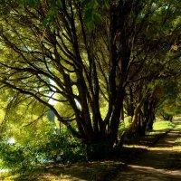 В тени деревьев :: Анастасия Смирнова