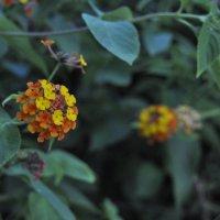 Мои любимые цветочки :: Juliya Fokina