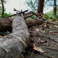Сломленные деревья :: catandrix