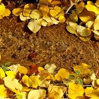 Бежит ручей, журчит ручей среди листвы осенней... :: Светлана