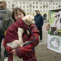 Северодвинск. Митинг в защиту животных (4) :: Владимир Шибинский