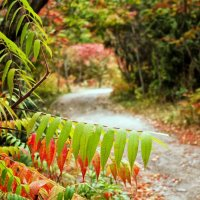 осенние листья.. :: юрий иванов