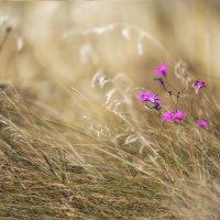 Краски осени :: Ирина Малина