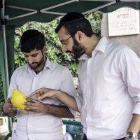 """Праздник Суккот: Выбираем плод Этрог для """"Лулав"""" :: Aleks Ben Israel"""
